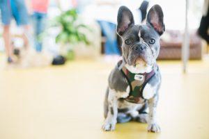 Tierarzt für Kleintiere - Tierarzt in Waidhofen