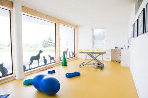 Tierarzt für Hunde - Tierarzt in Zwettl